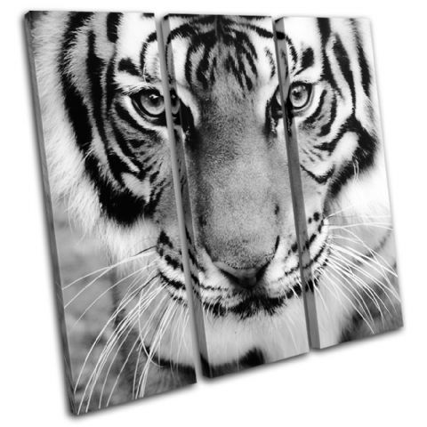 Tiger Face Animals - 13-1339(00B)-TR11-LO